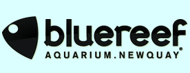 Blue Reef Aquarium Cornwall
